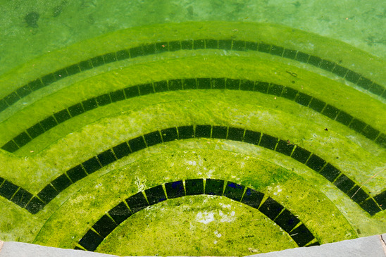 glony w całym basenie